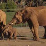Meditaciones masivas y el instinto de manada