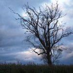 Los arboles mueren de pie: La despedida de los mayores con dignidad