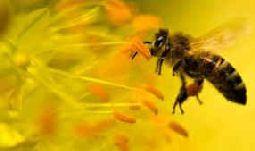 Bendiciones a los nuevos sembradores y abejas trabajadoras