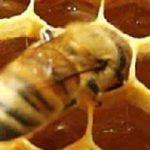 Jalea Real y homeopatia ¿Pueden combinarse o anulan su efecto?