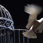 Tibios de espiritu, prisioneros de su mente