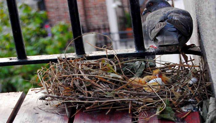 La leccion de la paloma