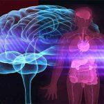 Nuestro cuerpo habla