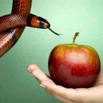 Obesidad y su relacion con la espiritualidad