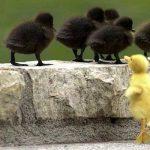 Mutantes espirituales y el ser dejado de lado por ser diferente