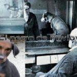 Abandona el Laberinto: Estrategia El Perro de Pavlov