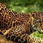 Lunas Mayas: La luna Solar del Jaguar