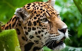La luna Solar del Jaguar