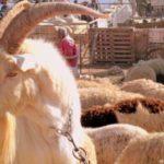 Fiesta del Sacrificio o Aïd el Adha
