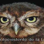 Lunas Mayas: Luna Auto-existente de la Lechuza