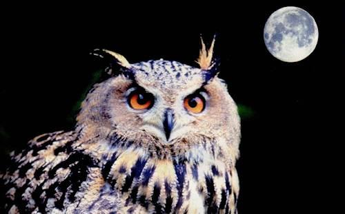 Luna Auto-existente de la Lechuza