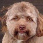 Estrategia El Perro de Pavlov en el Juego del Laberinto