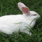 Luna Maya del Conejo en el Calendario Maya