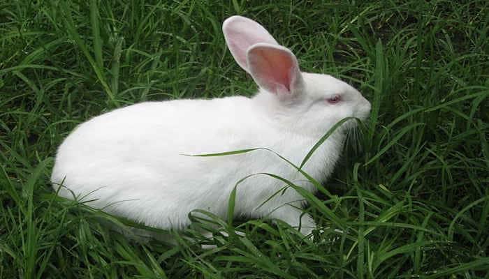 Luna Maya del Conejo