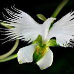 Espiritu de Sabiduria buscadores del conocimiento espiritual