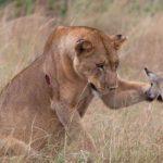 """<span class=""""entry-title-primary"""">¿Por que los animales estan cada vez mas humanizados?</span> <span class=""""entry-subtitle"""">El Reino Animal a la Nueva Tierra</span>"""