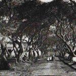 Cementerios antiguos de Buenos Aires: la energia de un pais que tapa todo